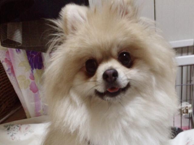 画像: 【ひめくりワンダホー】マロンちゃん(4歳3カ月)