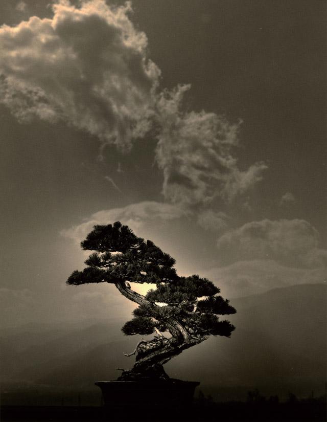 画像: 新たな1年。見る者を、原点に立ち返らせてくれるアート 山本昌男展「BONSAI 手中一滴」