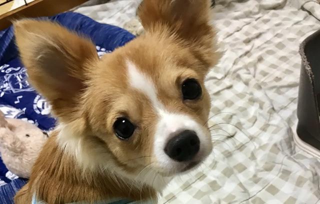 画像: 【ひめくりワンダホー】れんくん(1歳0カ月)