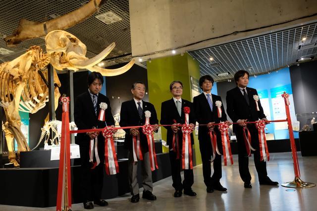 画像: 動物たちが大行進! 上野・国立科学博物館で『大哺乳類展2』