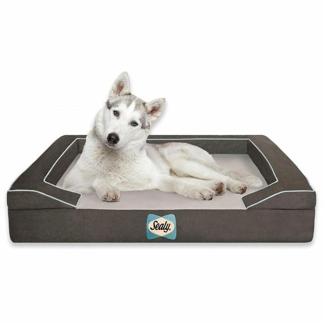 画像: 最高級の「犬ベッド」がもらえるフォトコンテスト