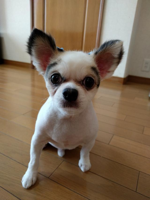 画像: 【ひめくりワンダホー】福助くん(8歳8カ月)