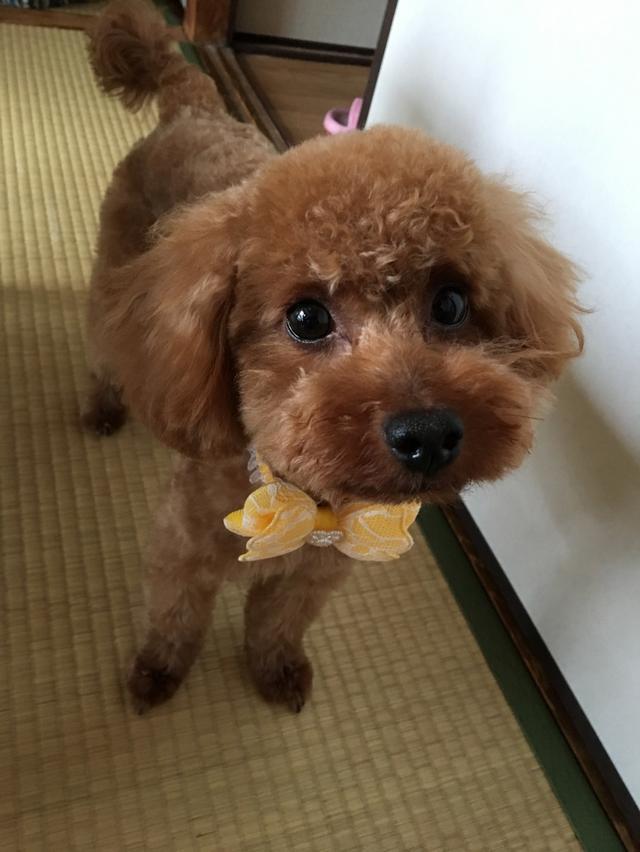 画像: 【ひめくりワンダホー】アミちゃん(3歳3カ月)
