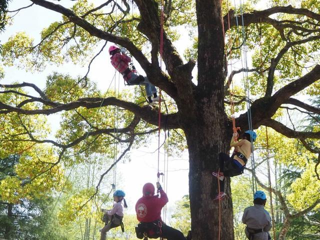 """画像: """"ツリークライミング""""で木や森を感じて自然を学ぶ"""