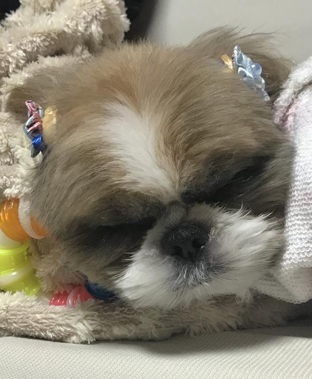 画像: 【ひめくりワンダホー】アラレくん(1歳6カ月)