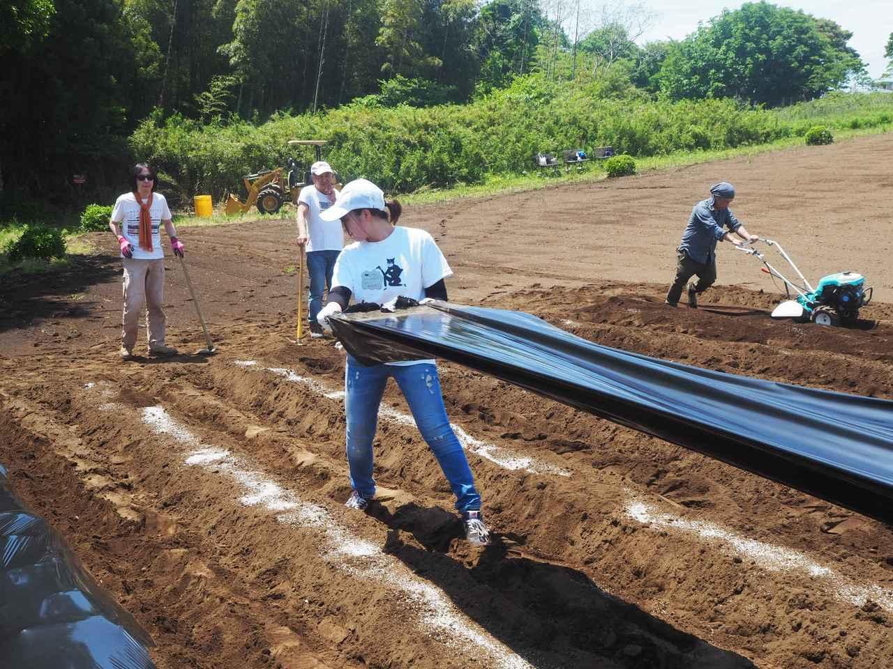 画像4: 新農園でサツマイモの植え付けと青空ゴハン