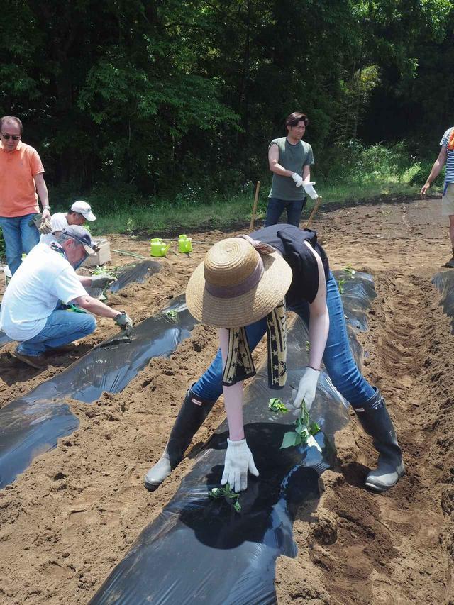 画像5: 新農園でサツマイモの植え付けと青空ゴハン