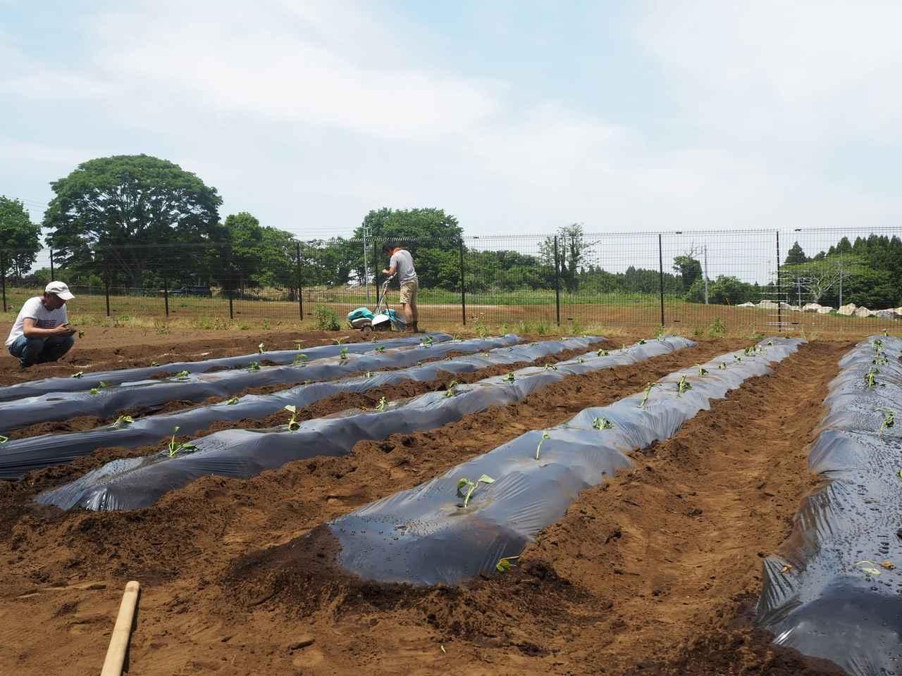 画像6: 新農園でサツマイモの植え付けと青空ゴハン
