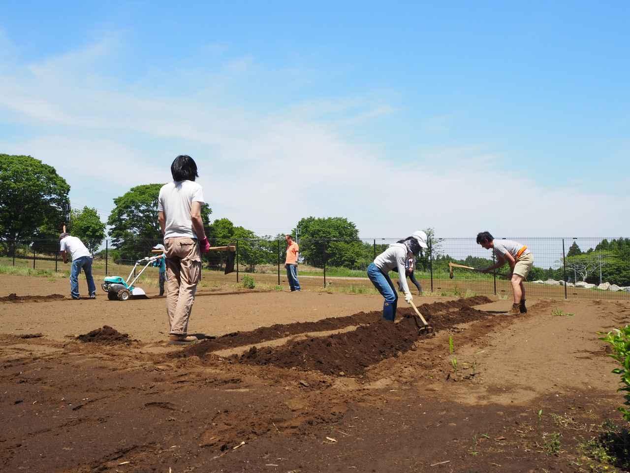 画像2: 新農園でサツマイモの植え付けと青空ゴハン