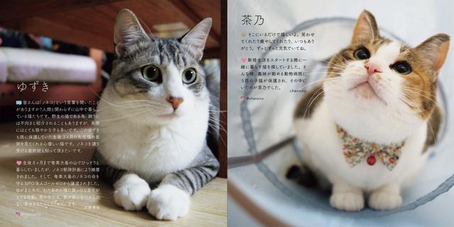 画像: 幸せになった保護犬猫たち! どんなコもみんなカワイイ/8月15日(木)の東京イベント