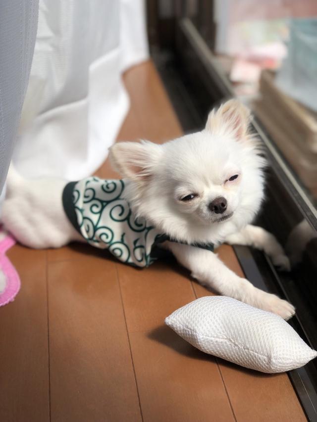 画像: 【ひめくりワンダホー】麻呂くん(1歳6カ月)