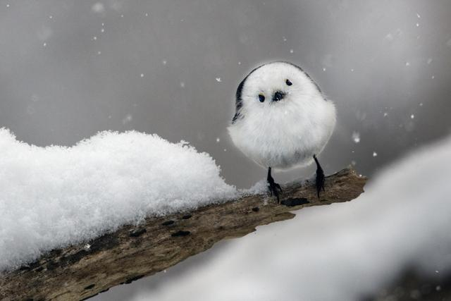 画像: この夏は「自然」とともに。「嶋田 忠 野生の瞬間 華麗なる鳥の世界」