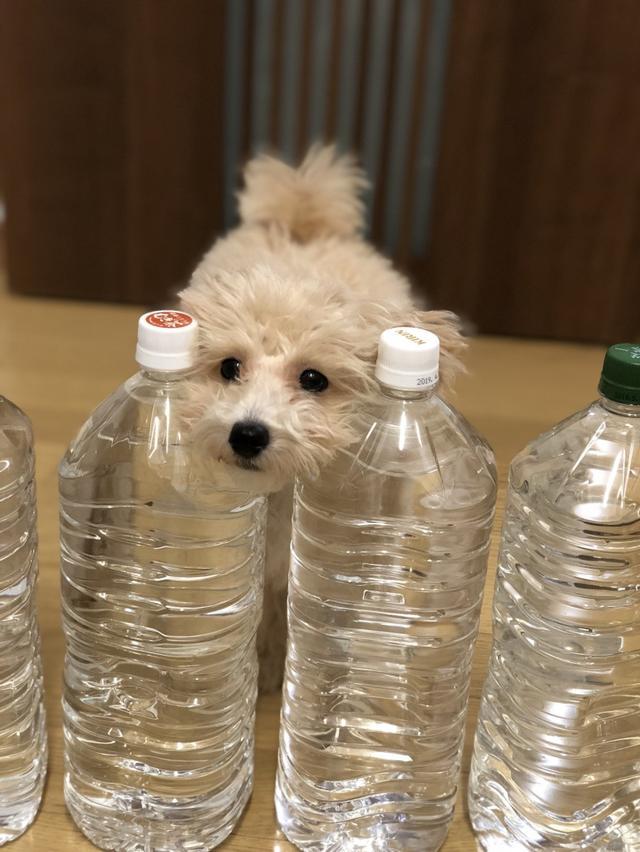 画像: 【ひめくりワンダホー】うみちゃん(1歳3カ月)