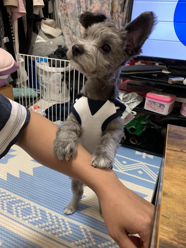 画像: 【ひめくりワンダホー】ココくん(0歳11カ月)