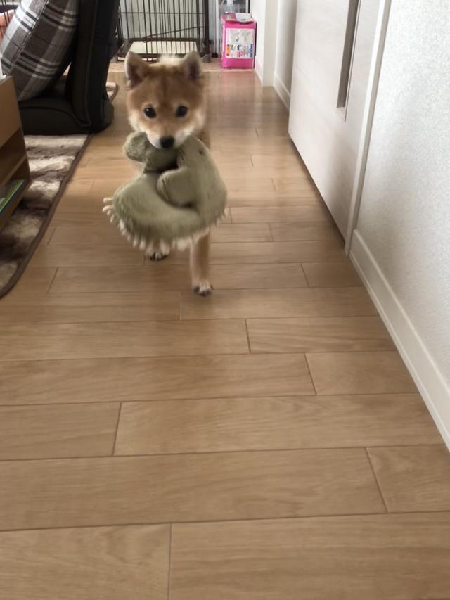 画像: 【ひめくりワンダホー】あいちゃん(1歳11カ月)
