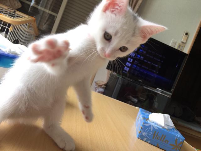 画像: 【ひめくりワンダホー】きなりちゃん(2歳5カ月)