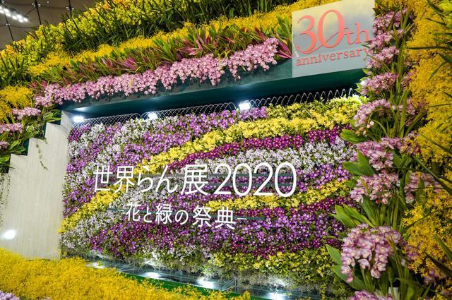 画像: 日本初公開の1鉢1200万円のらんも!東京ドームで「世界らん展2020」スタート
