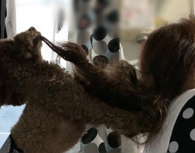 画像: 【ひめくりワンダホー】チョコくん(2歳3カ月)