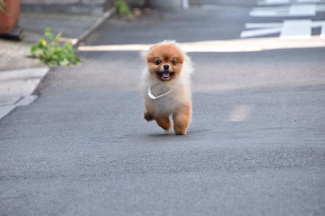 画像: 【ひめくりワンダホー】ブランくん(4歳11カ月)