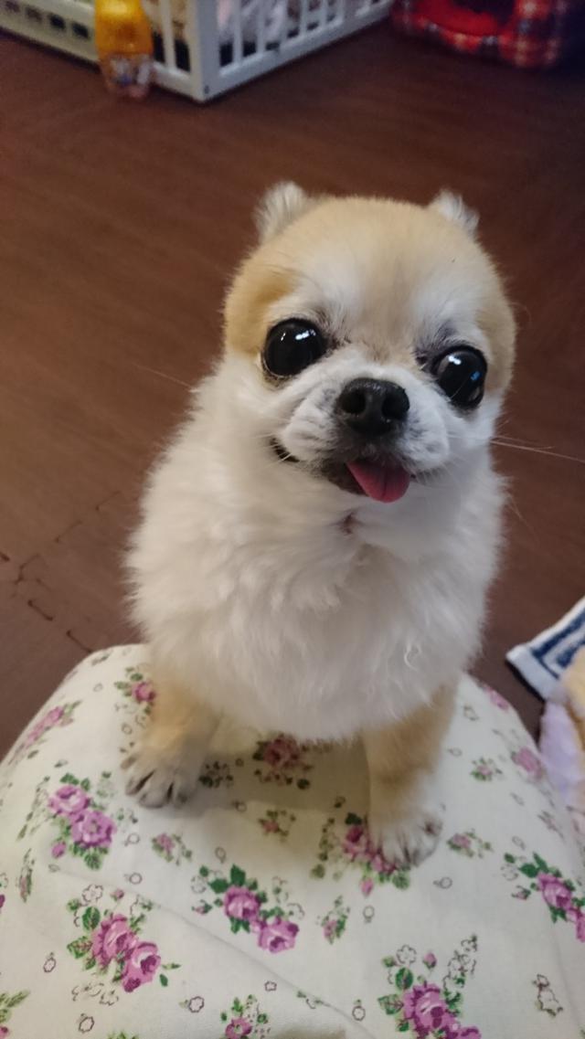 画像: 【ひめくりワンダホー】ココアくん(9歳5カ月)