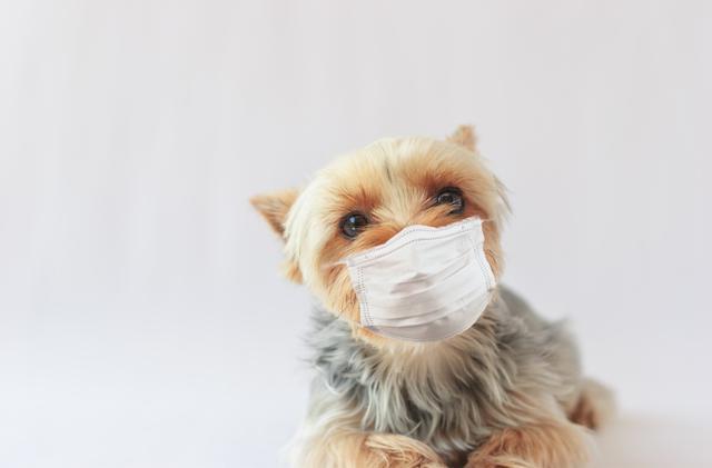 画像: 現役動物看護師のよく聞くお名前勝手にランキング!(犬編)