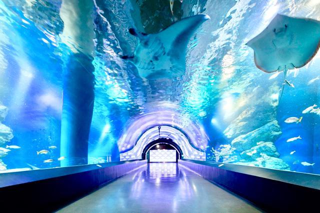 画像: 都内近郊の水族館・動物園が営業再開へ!アクアパークに八景島も