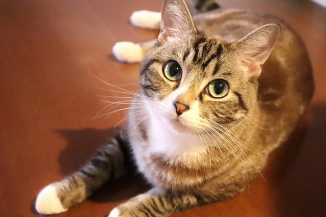 画像: 現役動物看護師のよく聞くお名前勝手にランキング!(猫編)