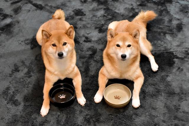 画像: 食が細い愛犬に美味しくご飯を食べてもらう方法4選