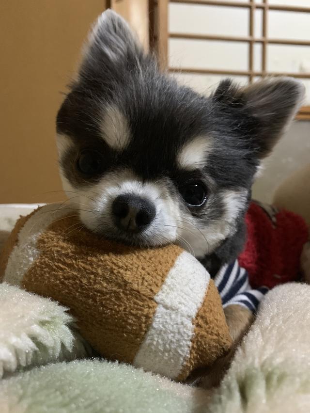 画像: 【ひめくりワンダホー】虎太朗くん(6歳0カ月)