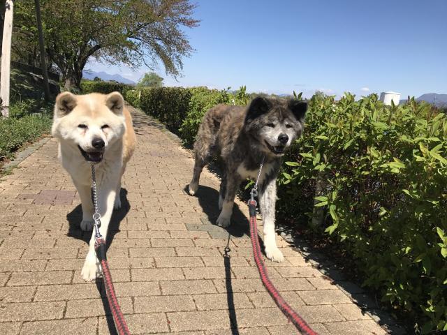 画像: 散歩中のトラブル防止! 犬に喧嘩させないために必要な3ステップ