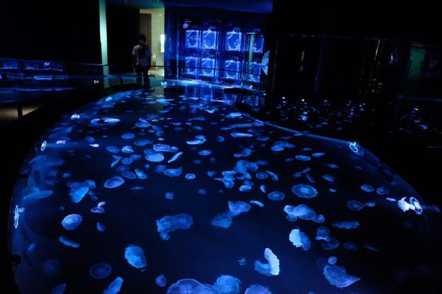 画像: すみだ水族館は上からクラゲ リニューアルオープンで新体感水槽