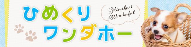 画像: 【ひめくりワンダホー】オハナくん(12歳7カ月)