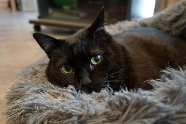 """画像: 避難区域の保護猫と暮らして""""9年目""""の春に思うこと「10年の節目に、つらさがよみがえった元飼い主に伝えたい」"""