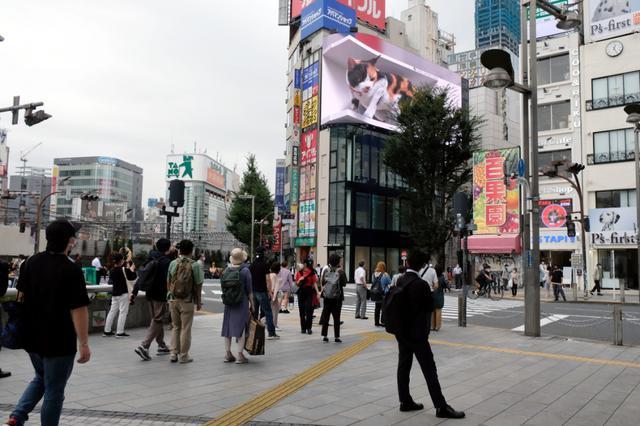 画像: 東京都、8日の新規感染者は1834人、重症者は252人