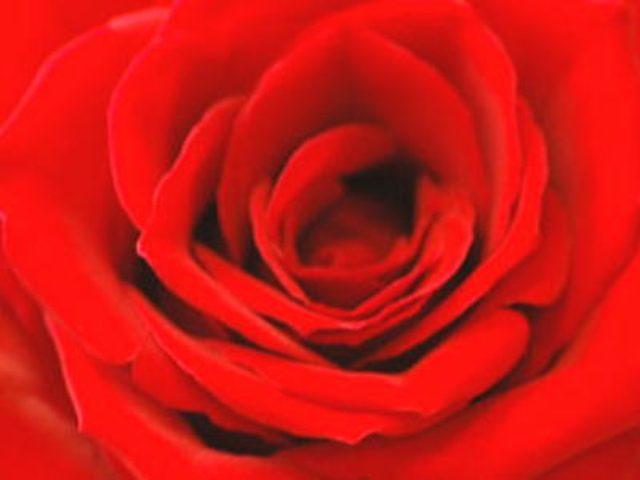 画像: 一輪の薔薇をプレゼント 花の贈り物 < 一輪のバラ |フラワーコード