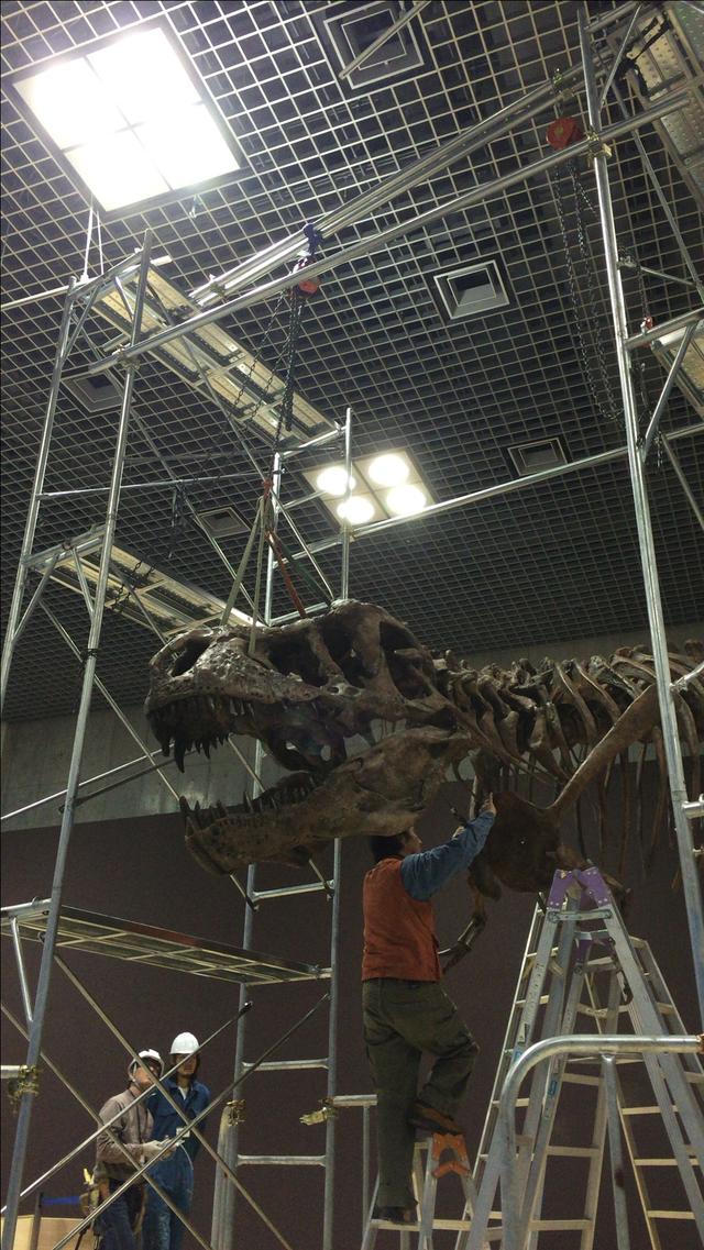 画像: ティラノサウルス組み立て作業中画像。
