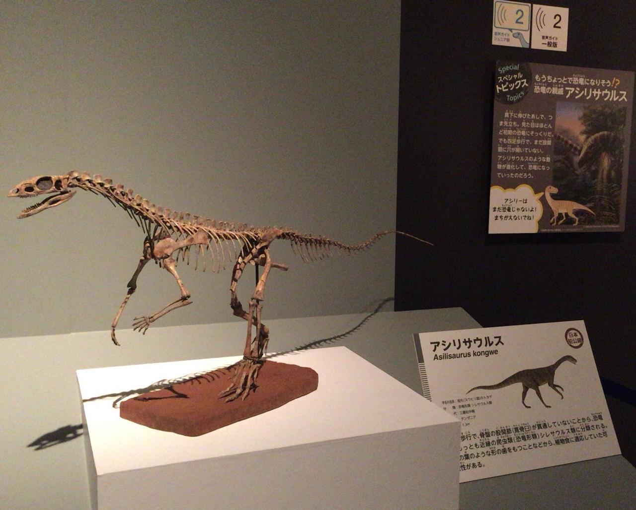 画像: アシリサウルス