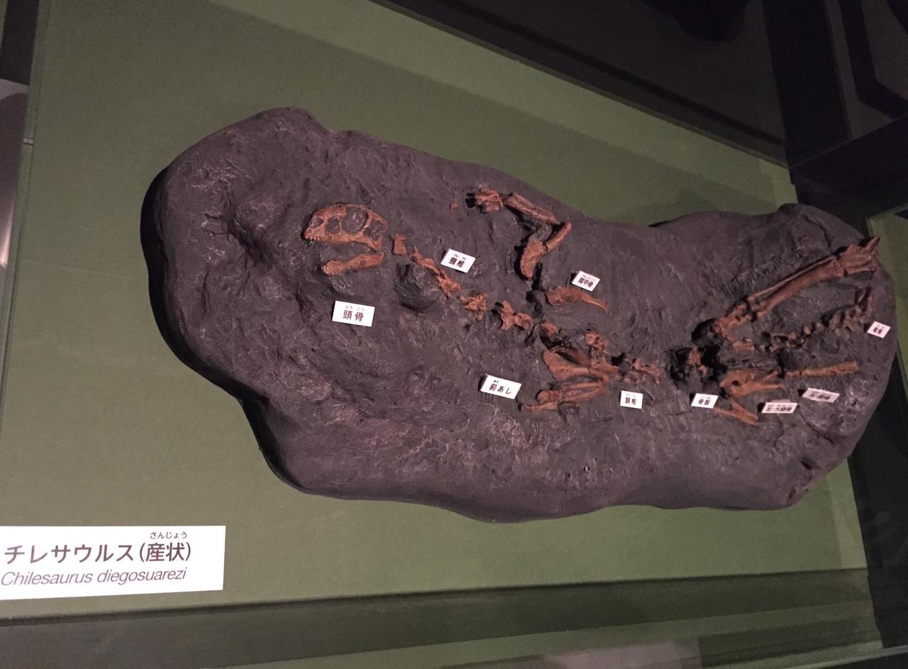画像: チレサウルス