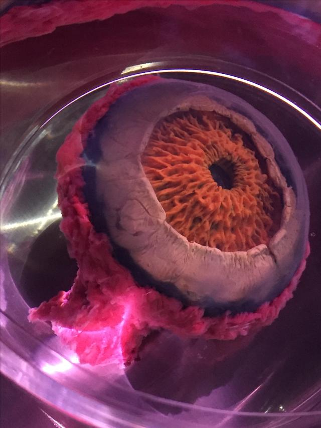 画像: 目はちゃんと保存されています。