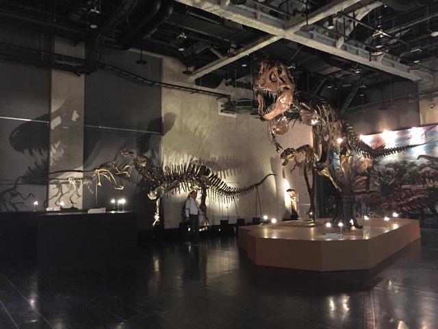 画像: ティラノサウルスの頭骨の影がおしゃれ!