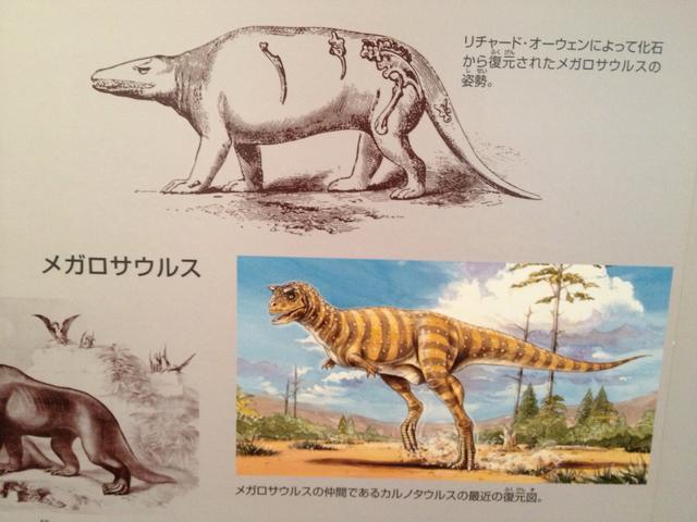 画像2: 福井県立恐竜博物館で撮影。