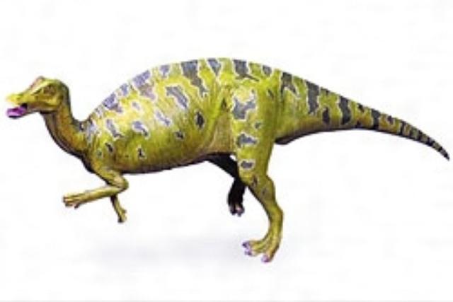 画像: 福井県立恐竜博物館のHPより www.dinosaur.pref.fukui.jp