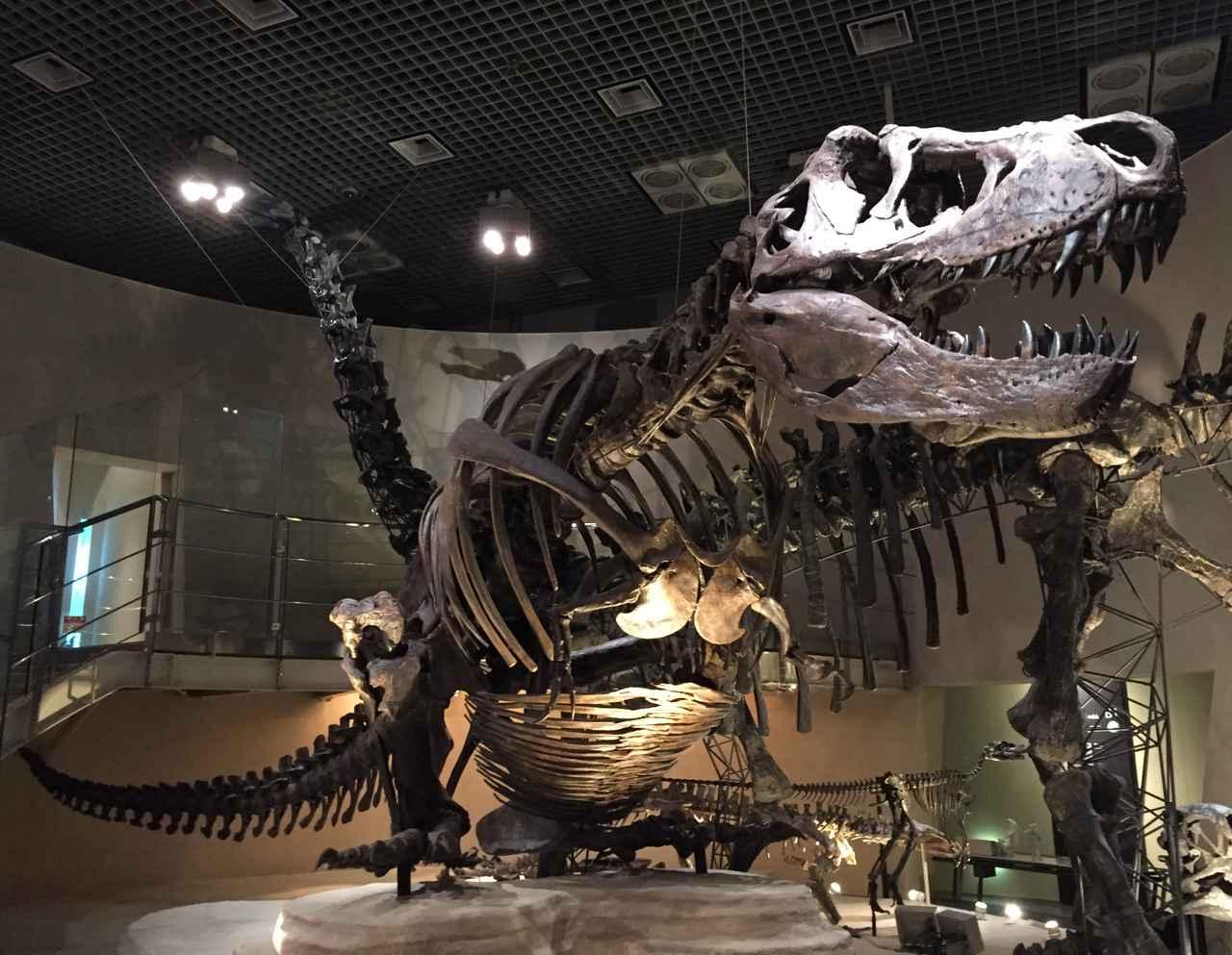 画像: 国立科学博物館のティラノサウルス全身骨格