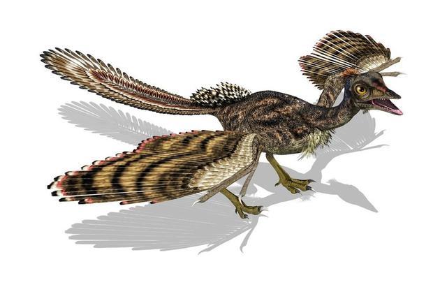 画像: 始祖鳥 www.kyouryu.info