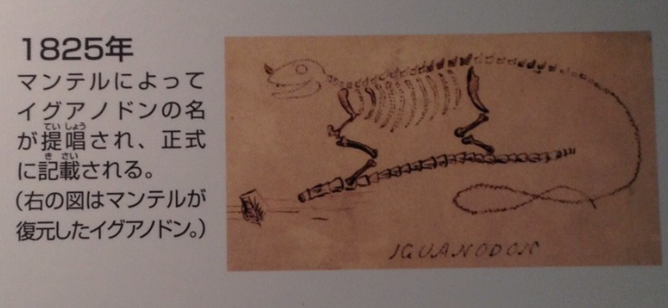 画像: 福井県立恐竜博物館で撮影。