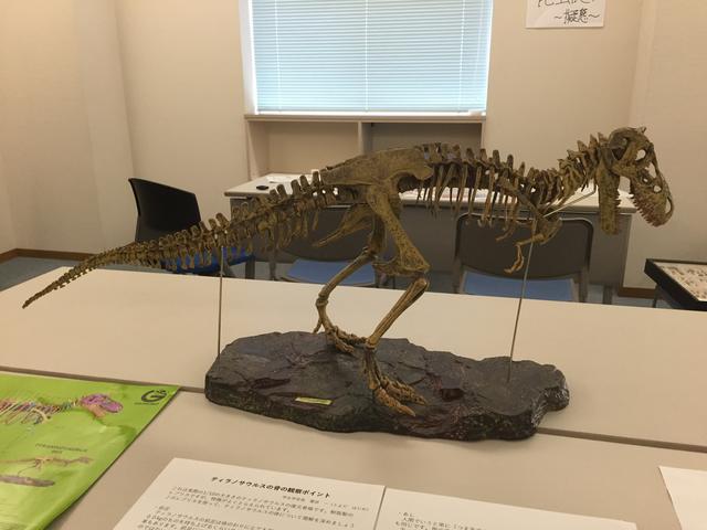 画像: 恐竜展示。普段はしまってあるそうです。