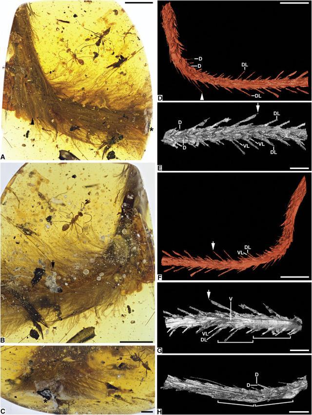画像: カレント・バイオロジー(Current Biology)より。 www.cell.com