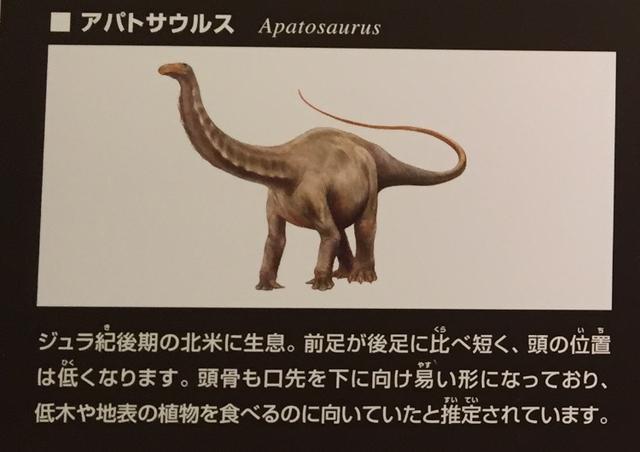 画像: ちーたんの館で紹介されているアパトサウルスの図。