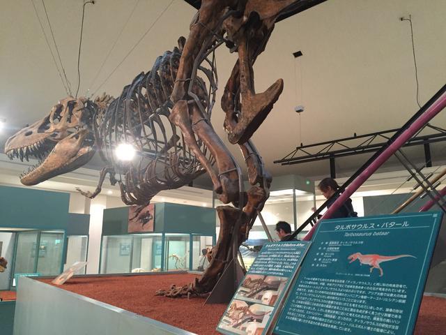 画像: タルボサウルス