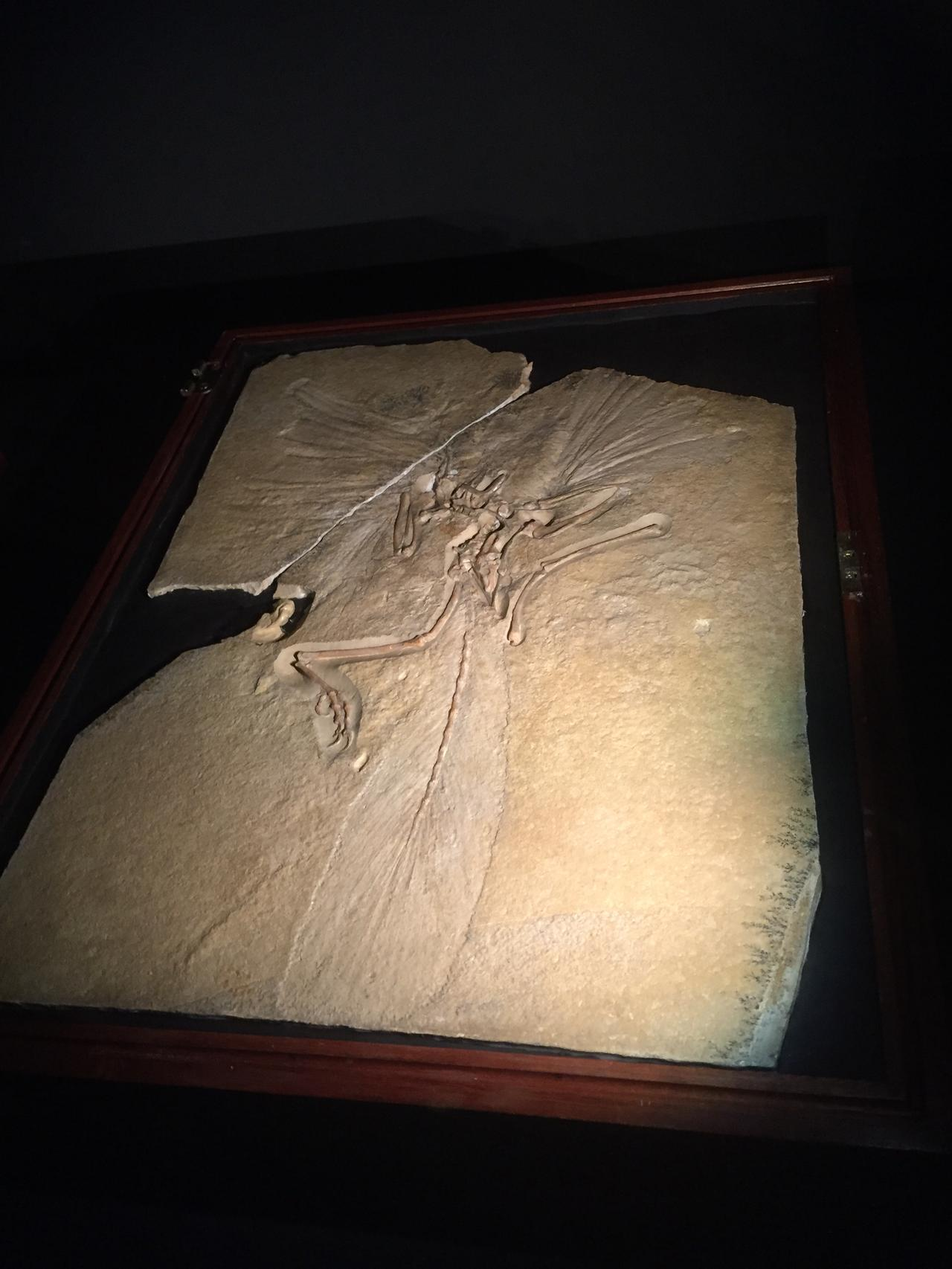 画像: 始祖鳥